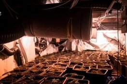 Hennepkwekerij in woning, vier verdachten aangehouden