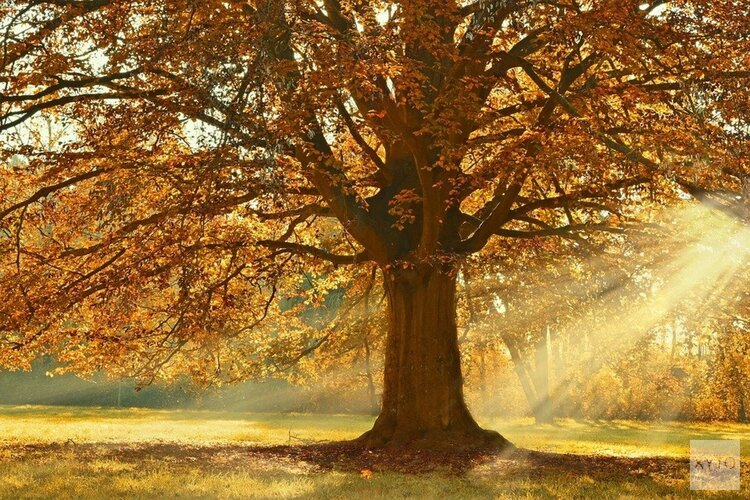 Eerst wind en regen, later in de week droog en rustig herfstweer