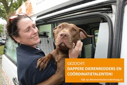 Dierenambulance Den Haag zoekt dappere dierenredders en coördinatietalenten