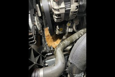 Herfst: klop op je motorkap om kattenleed te voorkomen